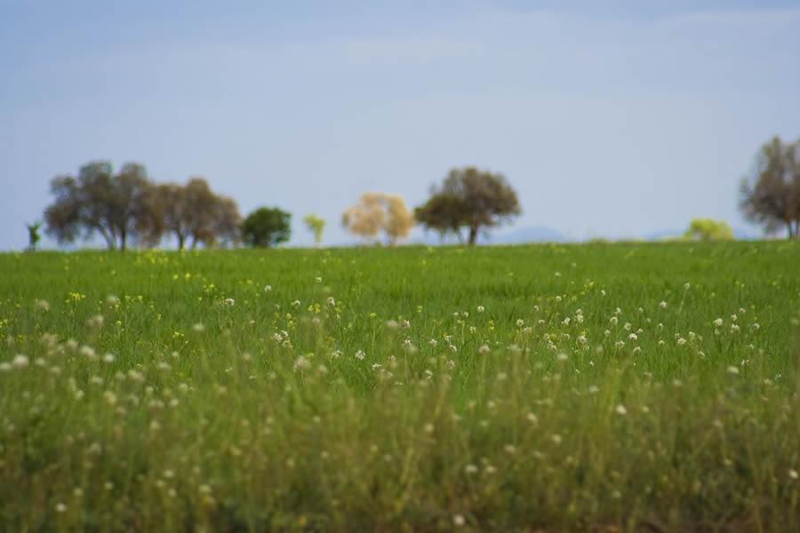 el_campo_primavera